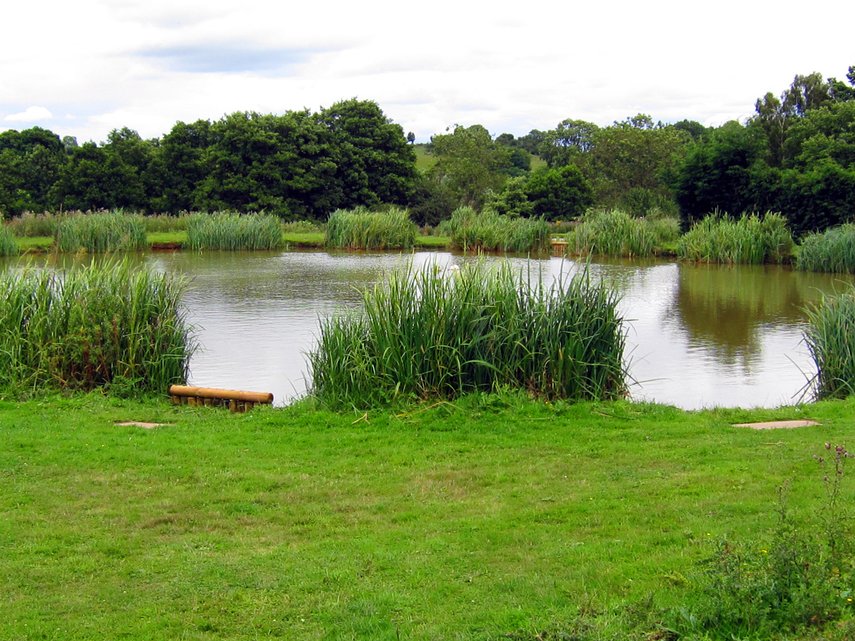 Barron Lodge Fishing Pools